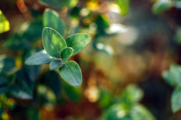 Tree leafs stock photo