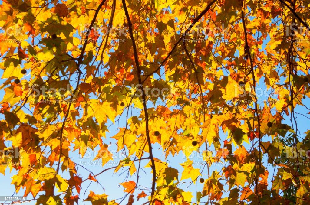 Tree Leaves Autumn Landscapebeauty Nature Wallpaper Stock