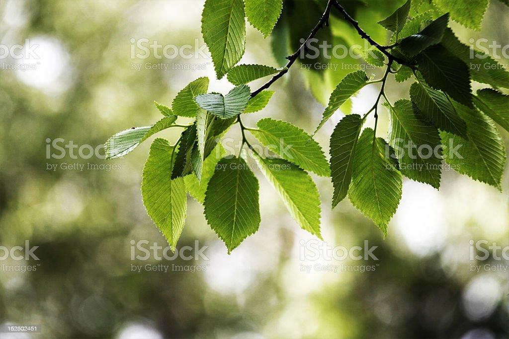 Tree leaves stock photo