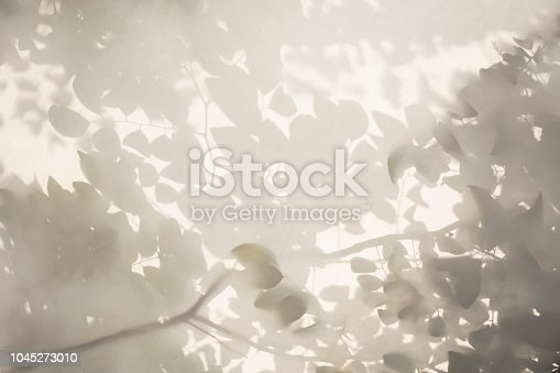 Tree leaves shadow on white wall Nature Abstract background Black and white