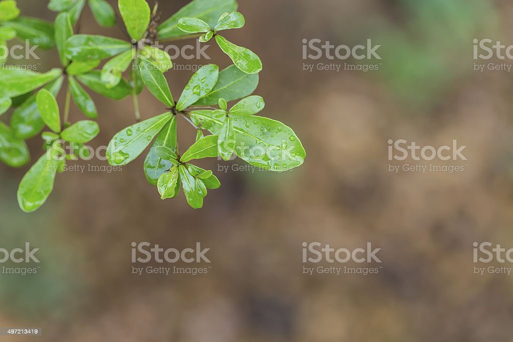 tree leaves with water drops stock photo