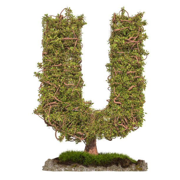 Tree letter U. Tree in shaped of letter U, 3D rendering isolated on white background stock photo