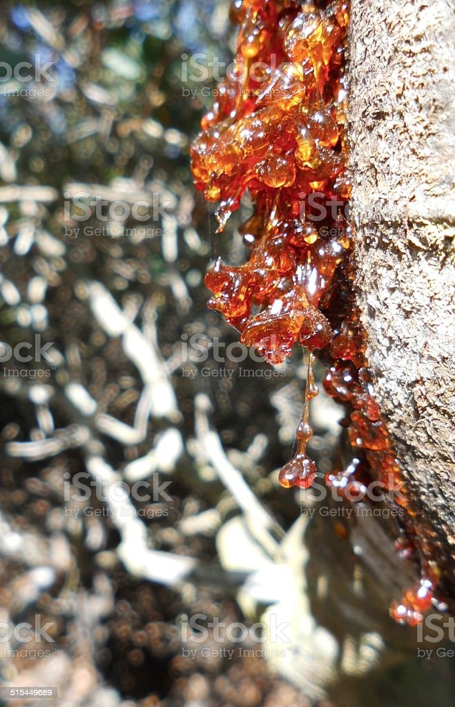 Tree lifeblood stok fotoğrafı