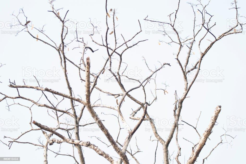 tree limbs royalty-free stock photo