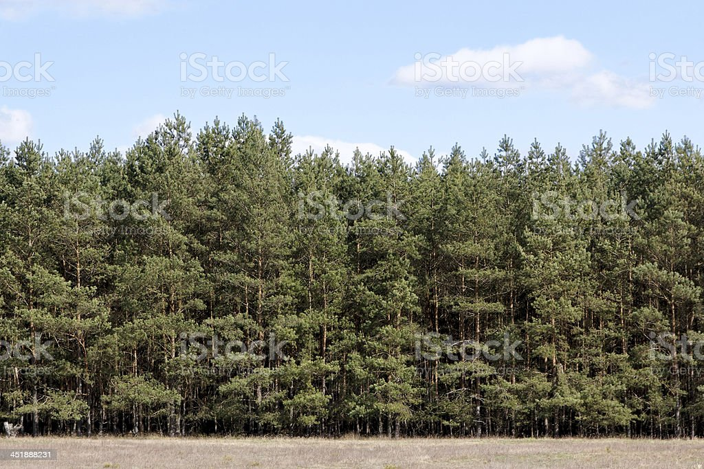 Tree Line at Meadow stock photo