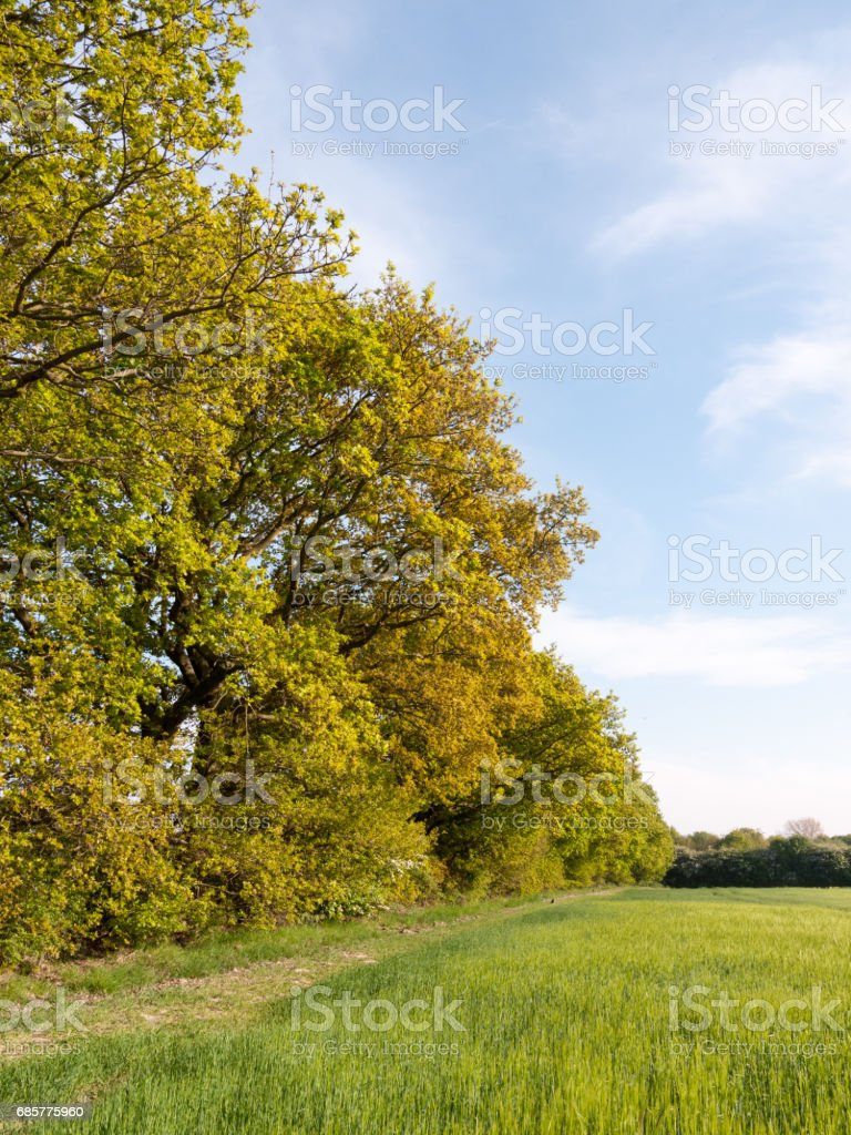 tree line outside in field farm sunshine beautiful royalty-free stock photo