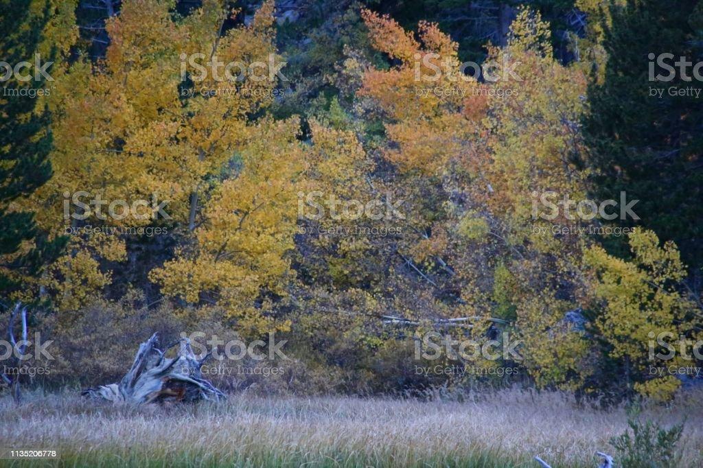 Tree line stock photo