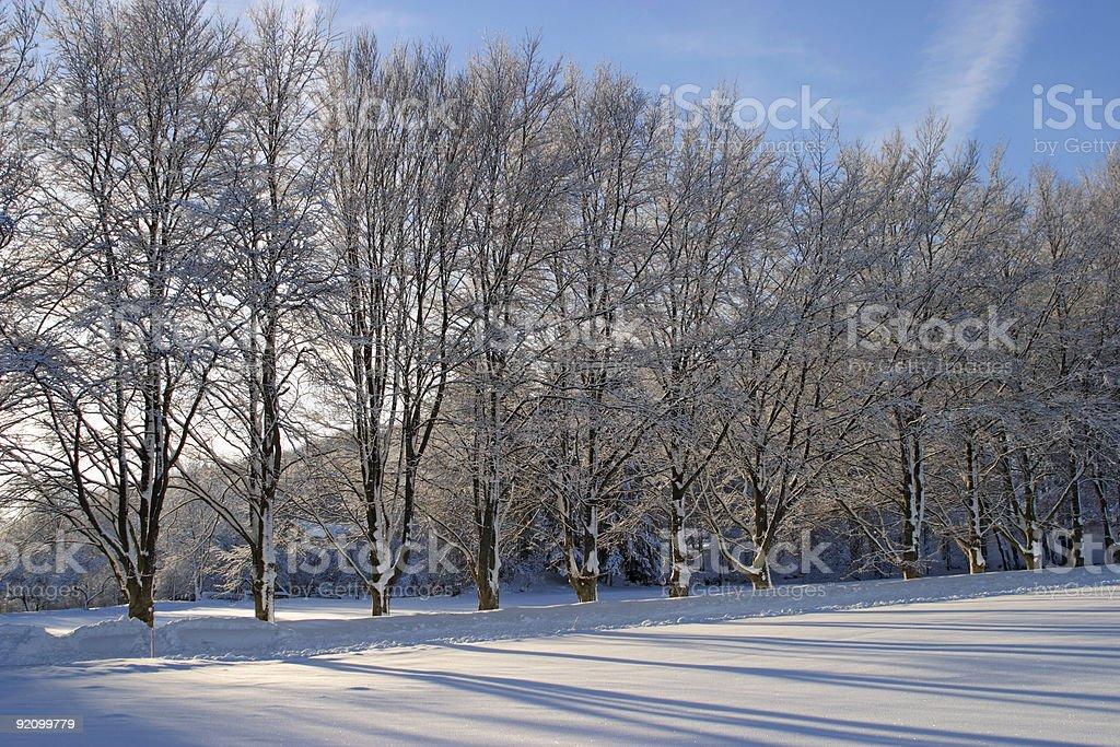 tree line royalty-free stock photo