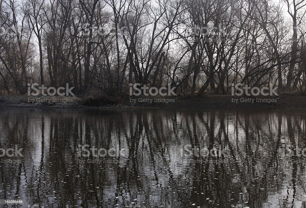Tree Line River Reflection royalty-free stock photo