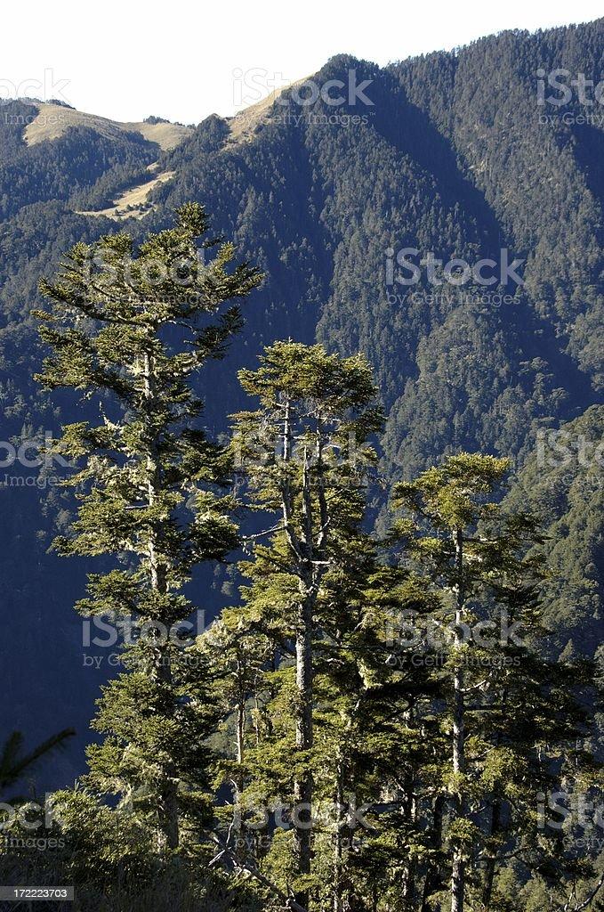 Tree line @ Syue Shan (Taiwan Central Mountain Range) stock photo