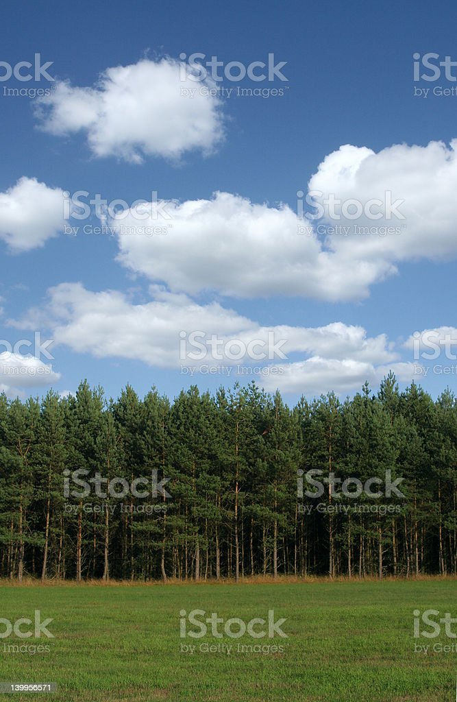 tree line with cumulus clouds stock photo