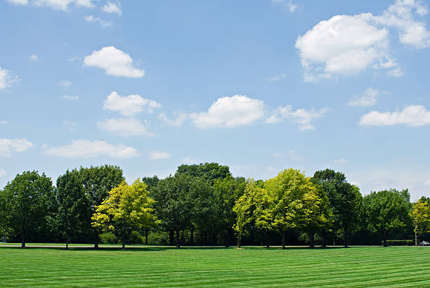 Tree Line with Sky Skyscape with tree line and lawn. treelined stock pictures, royalty-free photos & images