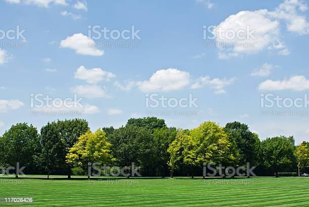 Photo of Tree Line with Sky