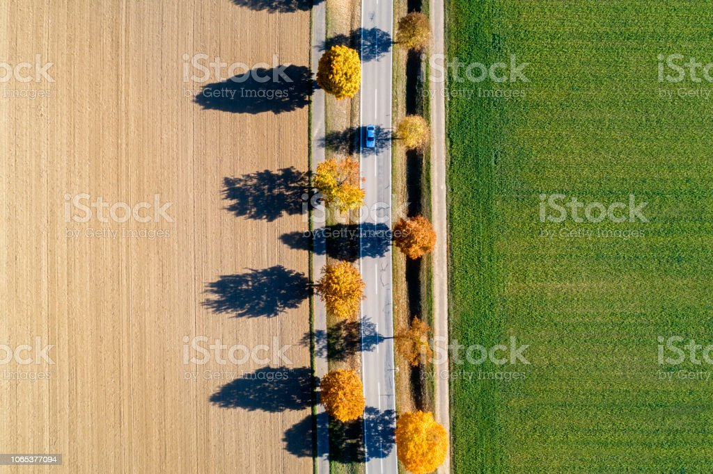 Car on treelined autumn road between fields, view from above,...