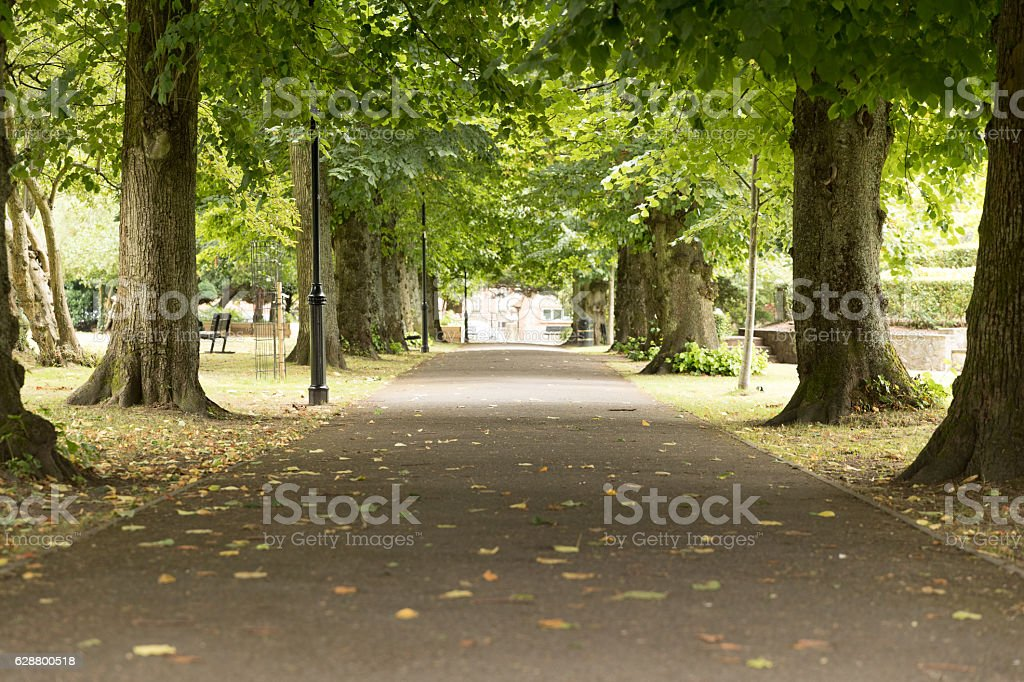 Tree lined avenue in Alton town park stock photo
