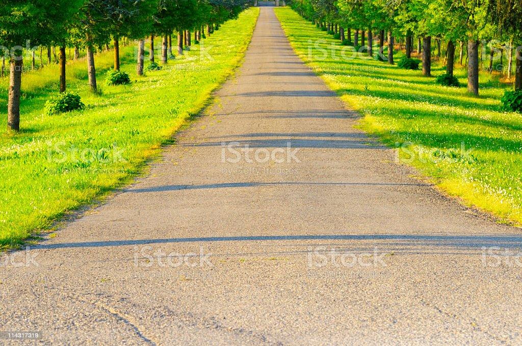 Tree Lined Avenue royalty-free stock photo