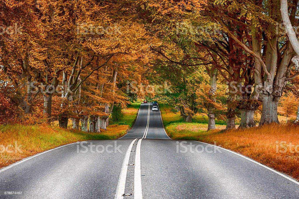 Tree lined B3082 road in the fall near Badbury Rings stock photo