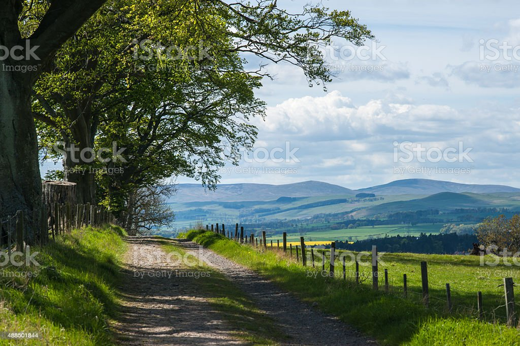 Tree Lined Country Lane and Cheviot Hills , Northumberland , England stock photo