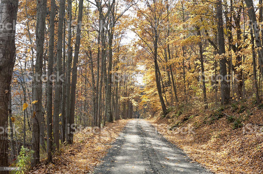 Tree lined country road with Autumn leaves royalty-free stock photo