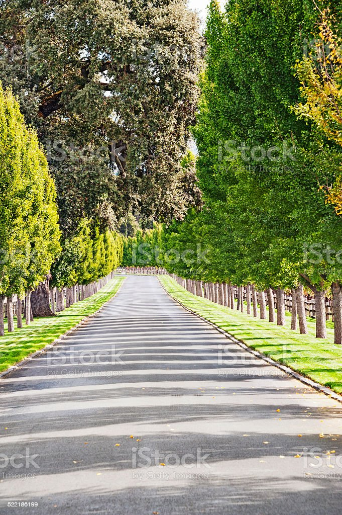 Tree Lined Driveway in Napa Valley Oakville California stock photo