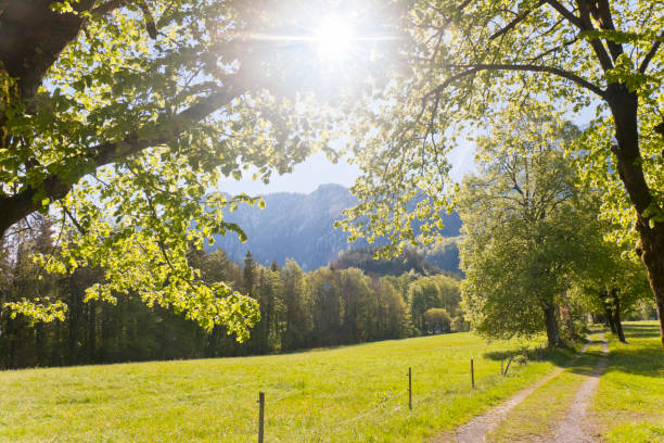 Tree lined path in spring at the alps stock photo