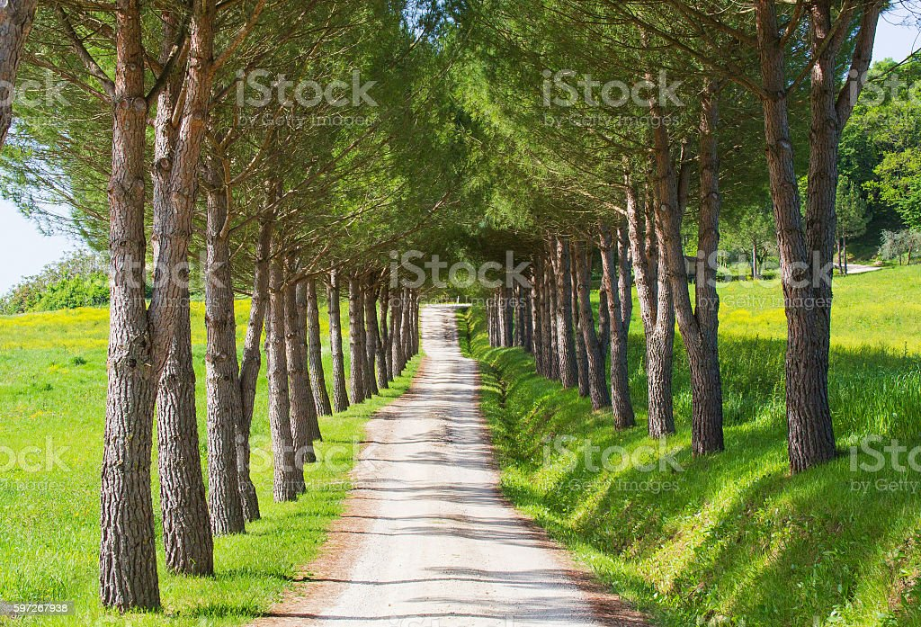 Tree lined path in summer royalty-free stock photo