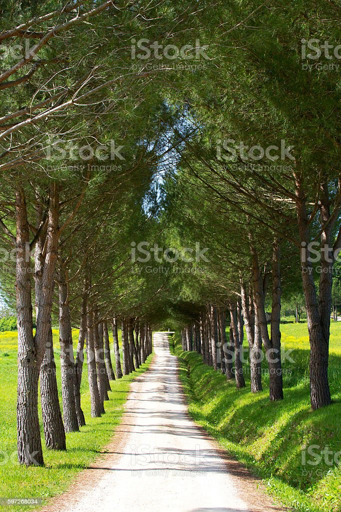 Tree lined path in summer Lizenzfreies stock-foto