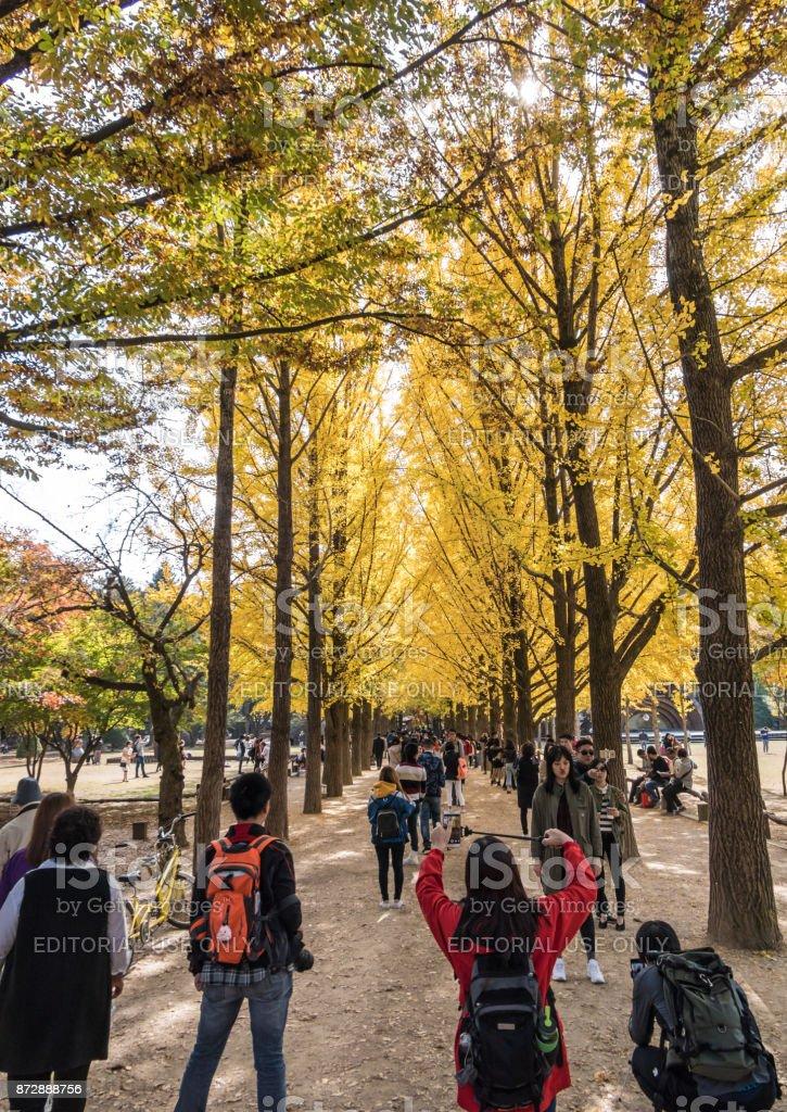 Tree lined path on Nami Island in South Korea stock photo