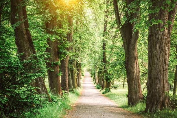 Allée bordée d'arbres - Photo