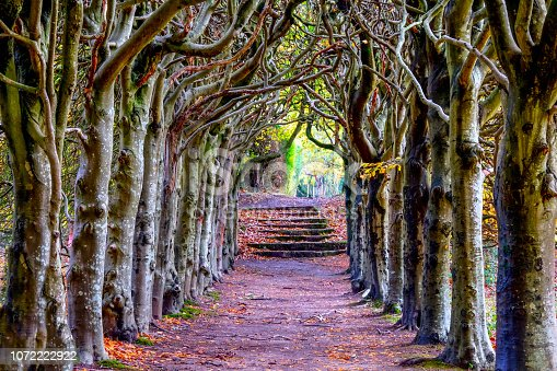 istock tree lined pathway with ancient trees forming an archway 1072222922