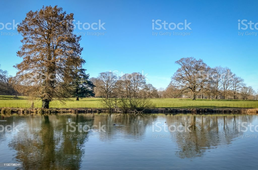 Tree lined river stock photo
