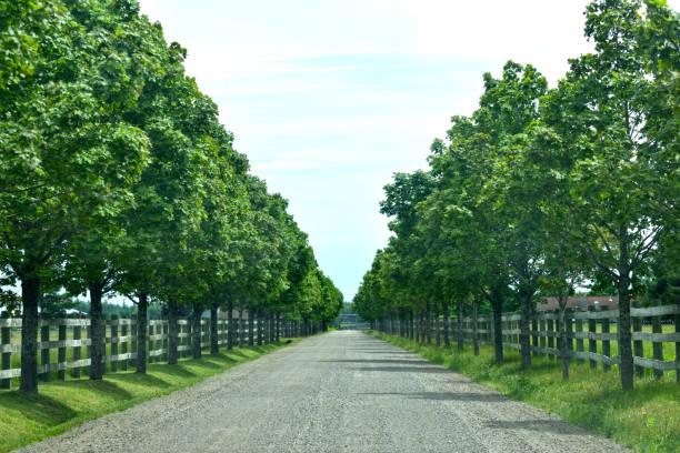Tree lined road at ranch abstract picture id985161948?b=1&k=6&m=985161948&s=612x612&w=0&h=xbiztgpo gxrchn8ahnipadll8sqhnbdx uqj7hli38=