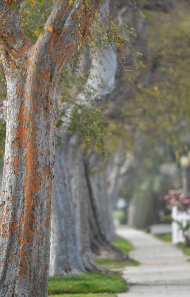 tree lined street - steven harrie stock pictures, royalty-free photos & images