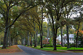 Queens Road West in Myers Park in the fall with tall Willow Oaks