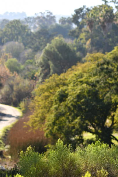 tree lined trail - steven harrie stock pictures, royalty-free photos & images