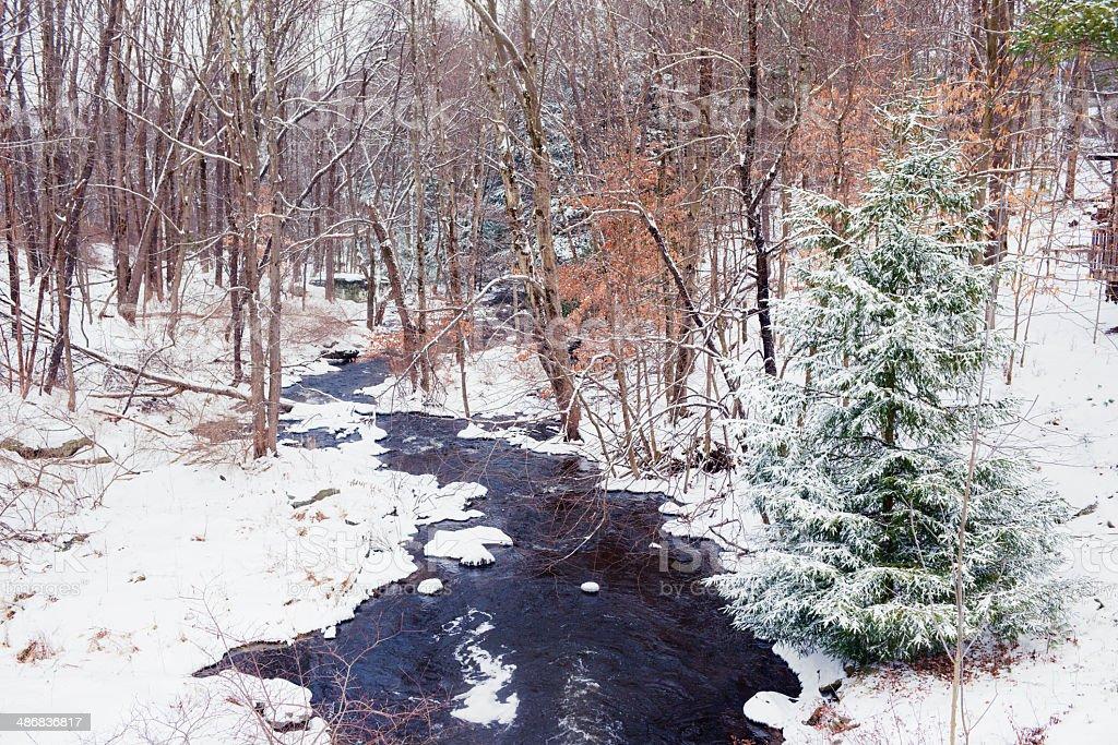 Tree Lined Winter Stream royalty-free stock photo