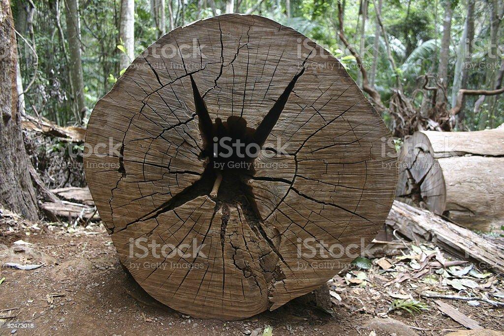 tree log cut through showing splits like jumping person royalty-free stock photo