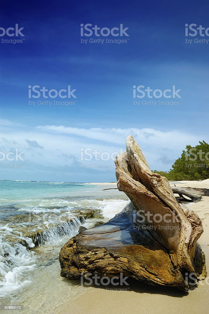 Tree log on a Tropical island beach royalty-free stock photo