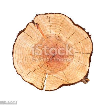 Slice of Tree log isolated on white