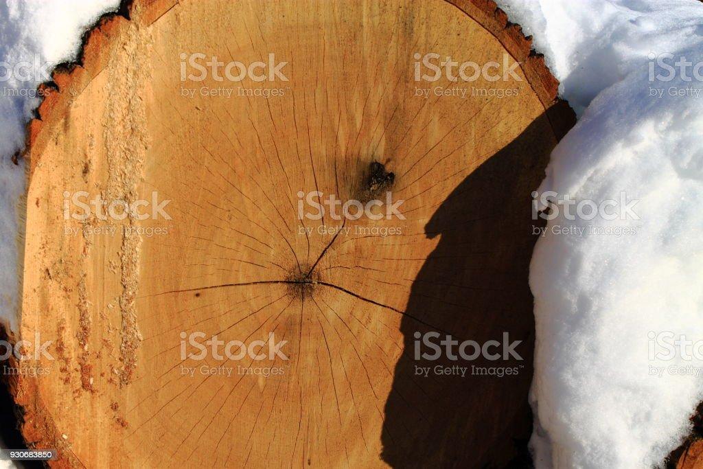 Tree logs in snow. stock photo