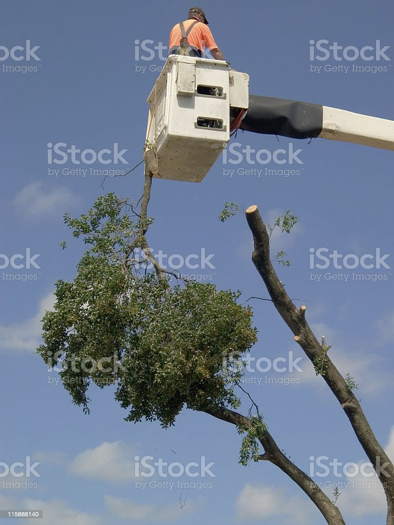 Tree lopping royalty-free stock photo
