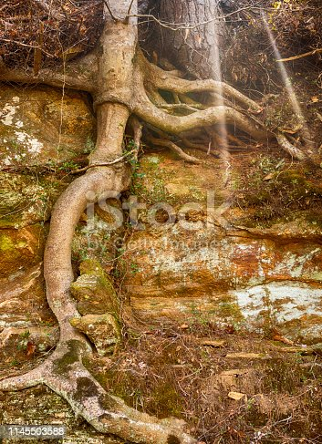 istock Tree Maintains Hold on Rock Wall 1145503588