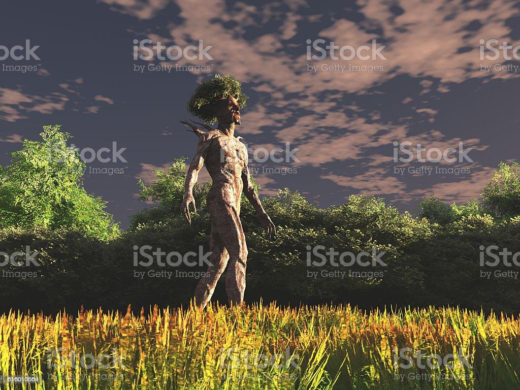 Baum Mann – Foto