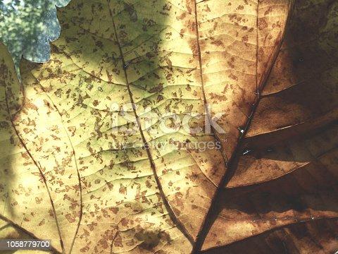 istock Tree, Maple, Shadow, Tree branch, Yellow maple leaf 1058779700