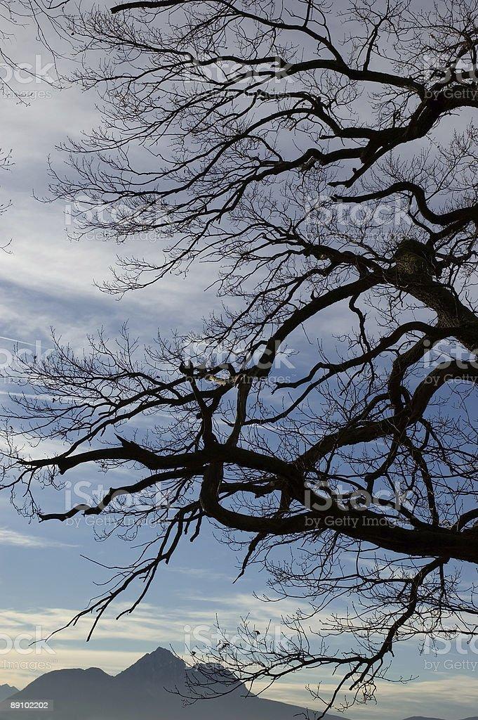 Tree Mountain Silhouette stock photo