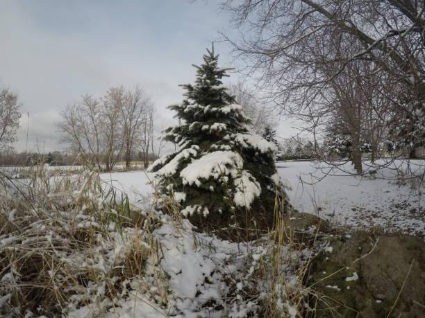 A tree near Christmas. stock photo
