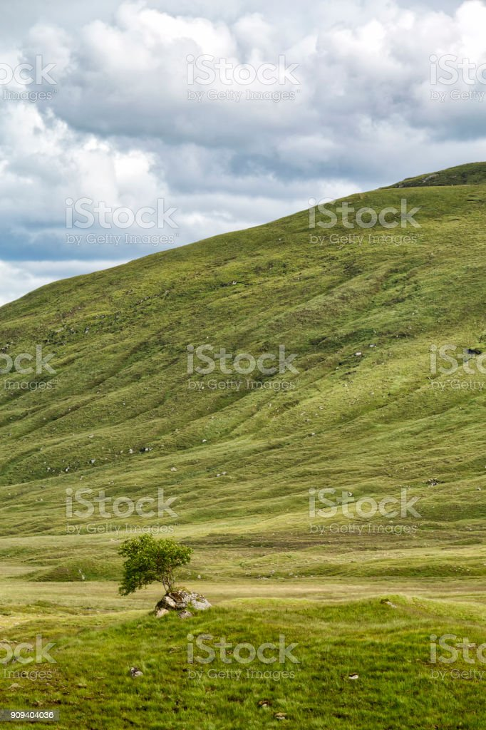 Tree near Loch Cluanie stock photo