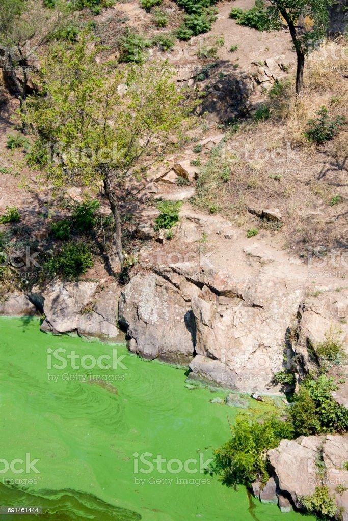 Tree near the green water stock photo