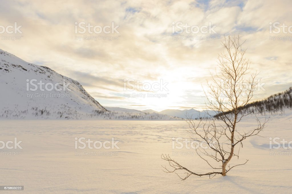 Tree next to a frozen lake during sunset in Northern Norway foto de stock royalty-free