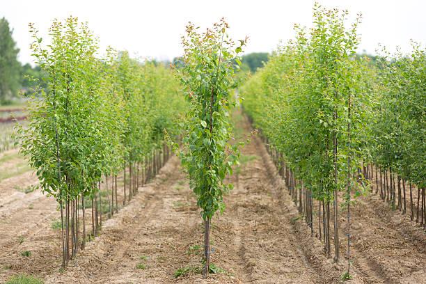 Tree nursery stock photo